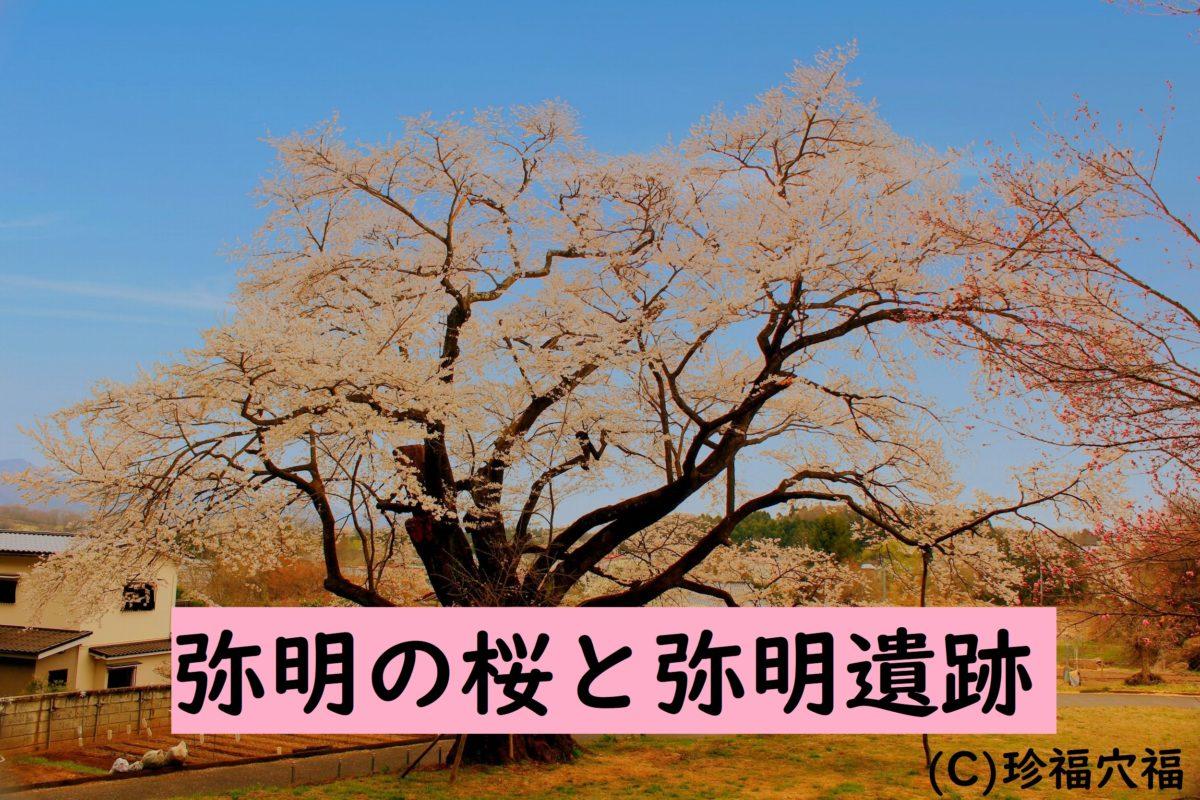 弥明の桜!遺跡とともに佇む【郡山市田村町の穴場の桜】